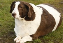 Doggie Foods for Health / Finding an appropriate diet for your furry friends is crucial to his health as well as to expanding his life expectancy. Here you can find some really helpful tips and tricks for feeding your dog the healthiest food.