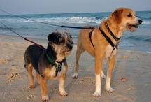 """Dog-Friendly Places / Here you can find some of the best and most favorite dog-friendly places from all over to """"down under"""". From dedicated walking places like parks, to camping, hiking and beaches, you are sure to find some really great ideas for places where you and your dog can have some quality and healthy outdoor fun."""