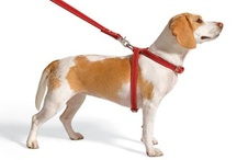 Dog Training Tips / The Dog Wiz is a communications expert. Dog Training is a lot about body language. Here a bunch of books and pointers on make life with your dog a dream instead of nightmare.