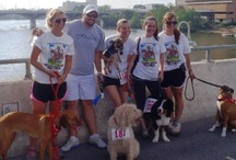 """Communities and Events / There are a lot of communities out there which gather people and dogs together. From dedicated """"walking events,"""" to """"volskmarching with your dogs,"""" this page will help you find out where you can go and what you can do in order to socialize and stay healthy at the same time."""