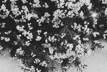 Flowers / Flowers / Blooms  www.leysaflores.com