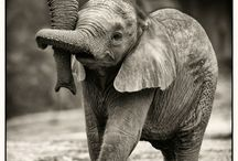Elephants make me Happy :) / One of the smartest creatures on Earth / by Jamie Wilson