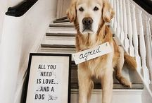 Animals (dogs) / ❤️Life is better with the companionship of a dog. ❤️ / by Melinda McCarty