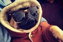 Pug Life / I have had a pug since I was a little girl and they are just the most adorable things ever! Keep Calm and Love a Pug! ;)  / by Jamie Wilson