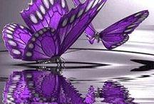 Lilacs&Lavender