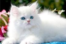 kitties / by Cyndy Petterson
