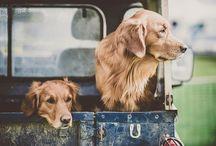 Man's best friend / by Erin Plowman