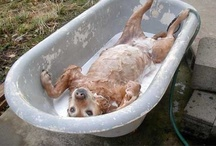 It's a Dog's Life! ;) / so loved and pampered it must be rough! lol / by Mary Hough