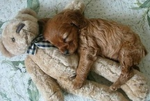 Sleepy Pets / by BeddingStyle.com