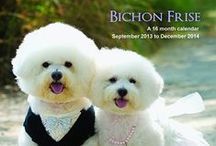 Bichons are the best / by Sharon Rogers-Anderson