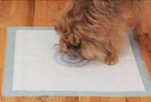 Bullseye Pee Pad / With Bullseye Pee Pads, your dog will hit the bullseye every time! Bullseye Pee Pads are fitted with concentrated pheromones right in the center of the pad, meaning your pup does his business right where he's supposed to each and every time!