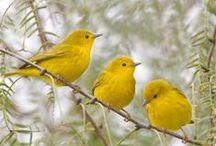 Birds / by designmerchants