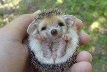 Super cute! / by Brandi Medeiros