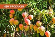 Farmhouse Producers