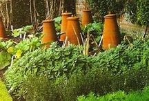 """Garden: Veggies & Kitchen Gardening / """"An old mouse was running in and out over the stone doorstep, carrying peas & beans to her family in the wood.""""          ~The Tail of Peter Rabbit"""