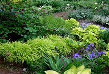 Planting My Shade Garden