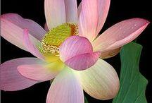 Flores & plantas - Flowers & Plants