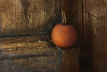 Harvest Time / by Darcy Geiger