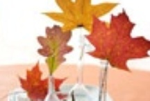 Fall Decor / by Alicia Lewis