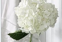 Cores - Branco - White