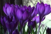 Cores - Lilás/Roxo - Purple/Lilac
