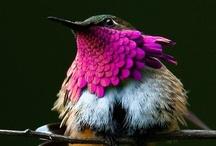 Birds of beauty