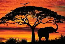 Africa -  north,  south, east and west / Wonderful and beautiful Africa!!