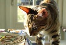 Cats / by kenderfrau