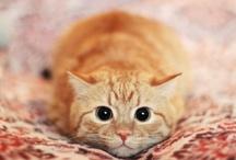 <3 CATS <3  / by Vicky Riley