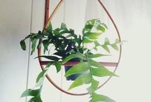 Plantsssz / by Kaitlyn Harun | Hawkeye + Trapper