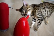 Cute Critters / Our favourite cute characters on pinterest! #cats #kittens #dogs #puppies