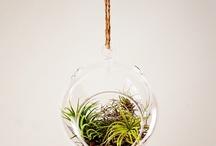 Garden - Verde jardin / by Andy Jimenez
