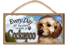 "Cockapoo Community Board / Feel free to Pin your favourite Cockapoo related Pins to this Board. If you haven't already been invited, all you have to do is follow this board and then email CockapooPlace@yahoo.com with ""Pinterest Cockapoo Community Board"" in the subject line & include your Pinterest name in the body of the email.  You will then be invited to contribute to the board. Members, please feel free to invite your friends.  Just edit the board and add your Cockapoo friends.  Please follow the board.  / by Cockapoo Place"
