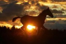 • нorѕe love • Ω / Horses are beautiful animals. They have to be my favorite. / by Jessica