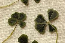 St.Patrick;s Day Recipes