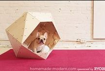 To my Babies Puppies / DIY for love animales / by Andy Jimenez