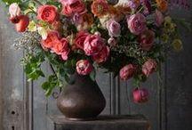 • plant • / #bloom #blossom #flowers #greenery