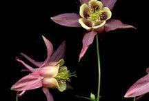 kukkia / by Ron Ron