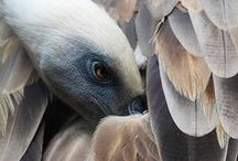 ℕeutras Terram ≀ Animalia