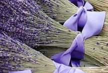 Color Study №12: lavender   pale lilac   hyacinth