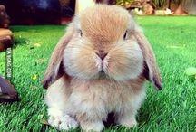 Cuteness / cute. cute. cute. cute overload!