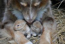 animals! / by Debbie Park