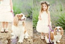 Wedding: Kids and Dogs are the sweetest guest / ring barer, flower girls, kids and pets