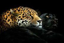 Creature Loves