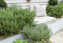 Kräuter | Herbs