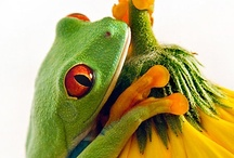Frogs / I love frogs :) / by Sarah Mullins Peterson