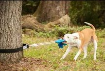 Playwell - The Goods / From the loudest squeaky toys to the bounciest balls, these playtime goods will keep your pup playing to the fullest!
