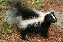 Pet Friendly / loving me stuff for the fur babies / by Denise Lemire