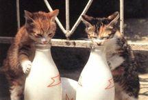 kittykat / gatti