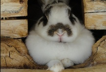 Bunny Rabbit / I love my two house bunnies.   Their cuteness brings a peacefulness to my daily life.  / by Rachel Whelton